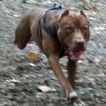 Perro escapista